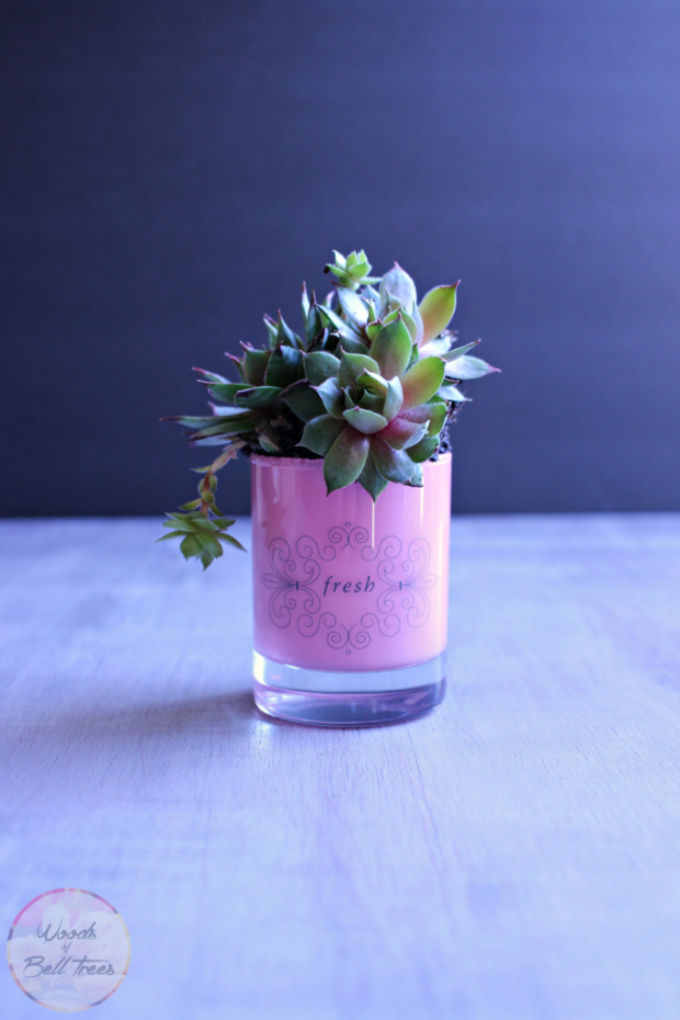 diy mothers day succulents gift