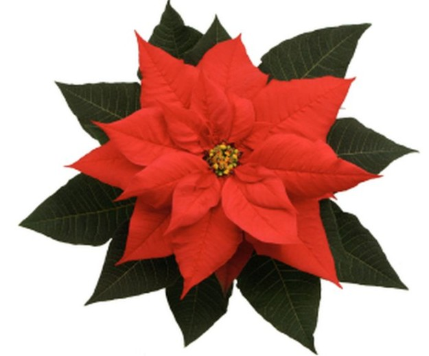 The Poinsettia   10 Flower Craft Ideas: How to Make Construction Paper Flowers
