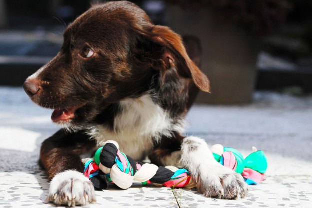 DIY Dogtoy   25 DIY Projects Your Pet Will Love