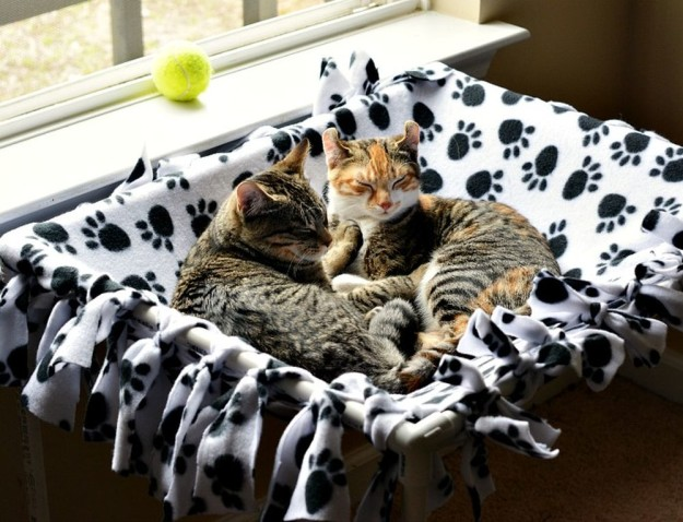 DIY No Sew Cat Hammock | 25 DIY Projects Your Pet Will Love
