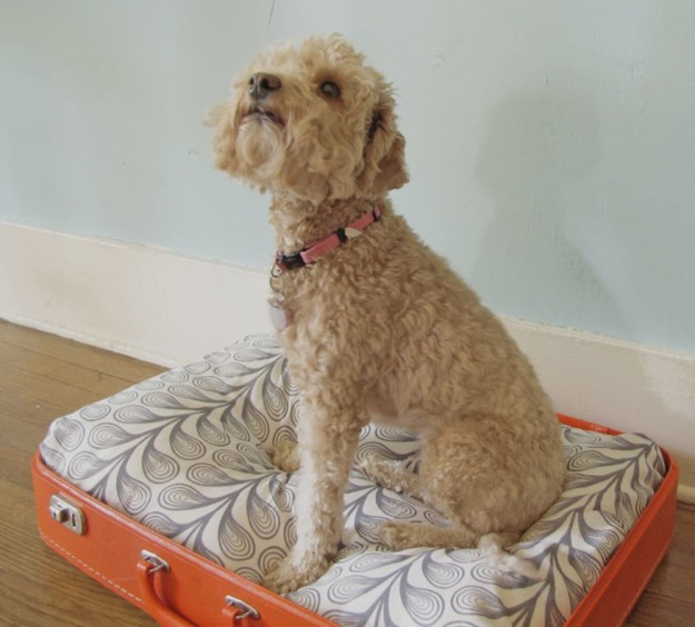 DIY Vintage Suitcase Dog Bed | 25 DIY Projects Your Pet Will Love