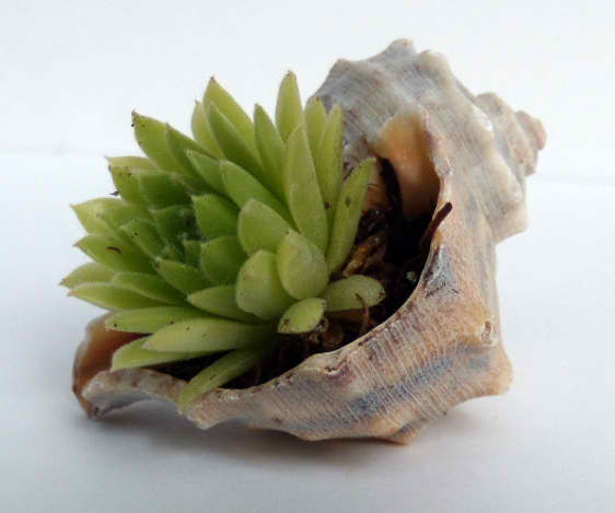 Seashell Planter | 15 Easy Seashell Crafts To Bring The Beach Indoors
